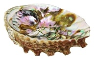 Abalone Shell Smudging Accessory