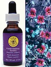 Zoom View - Purple Monkeyflower Flower Essence