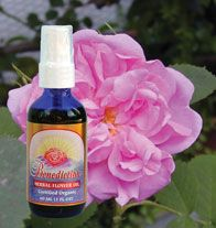 DROPPED: Flower Essence Services - Benediction Flower Essence - 2 oz. CLEARANCE PRICED